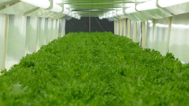 野菜工場1